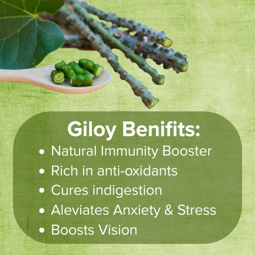 Giloy: Benefits and Uses